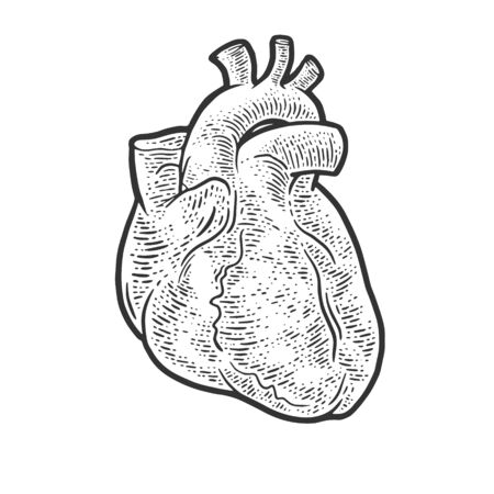 anatomical human heart sketch engraving vector illustration. T-shirt apparel print design. Scratch board imitation. Black and white hand drawn image.
