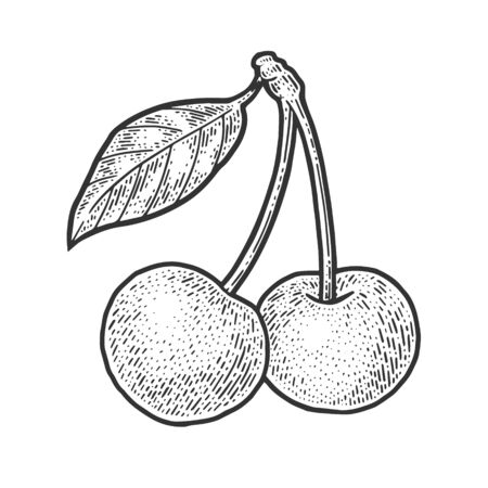 sweet cherry berry sketch engraving vector illustration. T-shirt apparel print design. Scratch board imitation. Black and white hand drawn image.