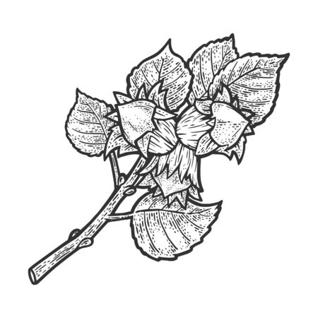 Hazel with nuts sketch engraving vector illustration. T-shirt apparel print design. Scratch board imitation. Black and white hand drawn image.