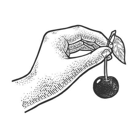 sweet cherry in hand sketch engraving vector illustration. T-shirt apparel print design. Scratch board imitation. Black and white hand drawn image. 일러스트
