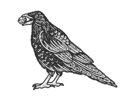 crow with a nut in its beak sketch engraving vector illustration. T-shirt apparel print design. Scratch board imitation. Black and white hand drawn image. 일러스트