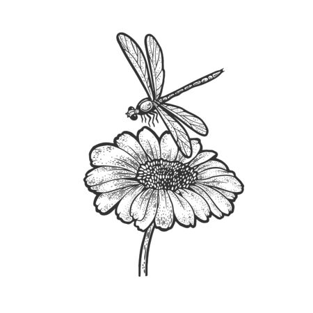 dragonfly over daisy flower sketch engraving vector illustration. T-shirt apparel print design. Scratch board imitation. Black and white hand drawn image.