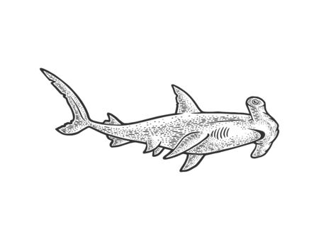 Hammerhead shark sketch engraving vector illustration. T-shirt apparel print design. Scratch board imitation. Black and white hand drawn image. 일러스트