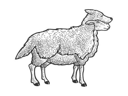 Sheep in wolf clothing sketch engraving vector illustration. T-shirt apparel print design. Scratch board style imitation. Black and white hand drawn image.