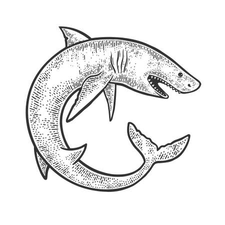 shark catshark rolled in circle ring sketch engraving vector illustration. T-shirt apparel print design. Scratch board imitation. Black and white hand drawn image.