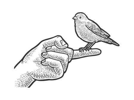 canary pet bird sitting on a finger sketch engraving vector illustration. T-shirt apparel print design. Scratch board imitation. Black and white hand drawn image. Ilustracje wektorowe