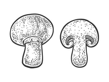 Cut champignon mushroom sketch engraving vector illustration. T-shirt apparel print design. Scratch board imitation. Black and white hand drawn image. 矢量图像