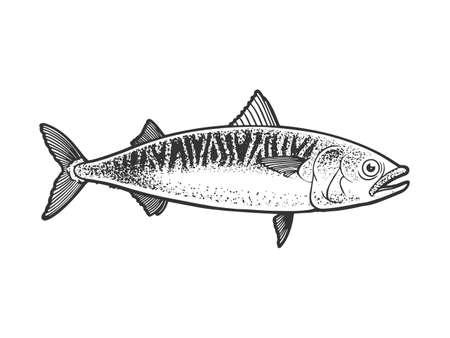 Atlantic mackerel scomber fish sketch engraving vector illustration. T-shirt apparel print design. Scratch board imitation. Black and white hand drawn image.