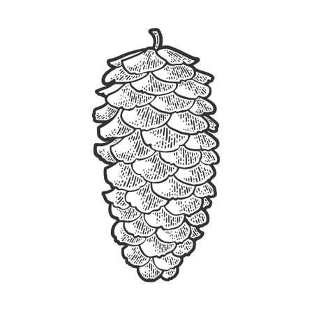 spruce pine cone sketch engraving vector illustration. T-shirt apparel print design. Scratch board imitation. Black and white hand drawn image.