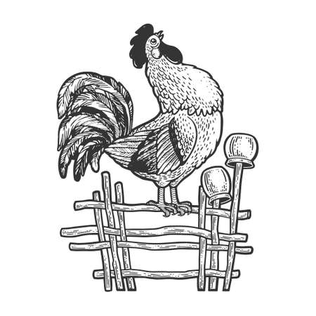 rooster crows on the fence sketch engraving vector illustration. T-shirt apparel print design. Scratch board imitation. Black and white hand drawn image.