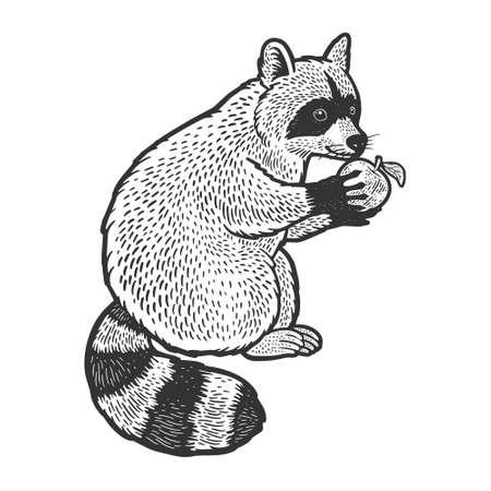 raccoon and apple sketch engraving vector illustration. T-shirt apparel print design. Scratch board imitation. Black and white hand drawn image.