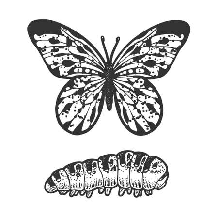 butterfly and caterpillar sketch engraving vector illustration. T-shirt apparel print design. Scratch board imitation. Black and white hand drawn image.