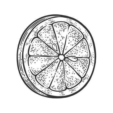 Lemon slice sketch engraving vector illustration. T-shirt apparel print design. Scratch board imitation. Black and white hand drawn image.