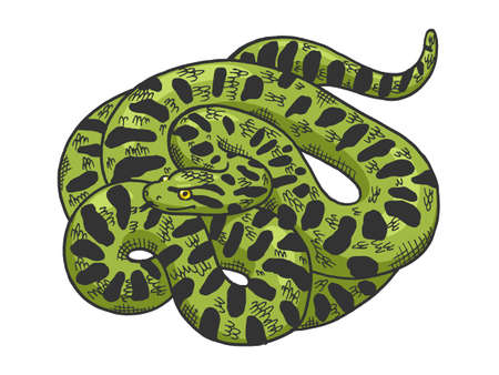 Big anaconda snake sketch color engraving vector illustration. T-shirt apparel print design. Scratch board style imitation. Black and white hand drawn image. 向量圖像