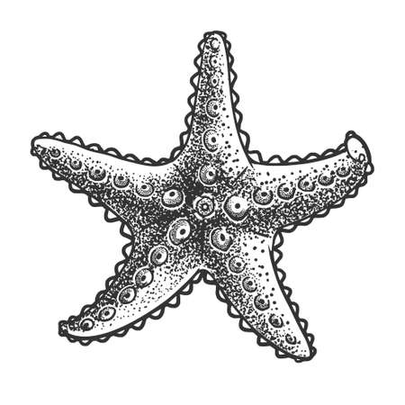 starfish sketch engraving vector illustration. T-shirt apparel print design. Scratch board imitation. Black and white hand drawn image. 向量圖像