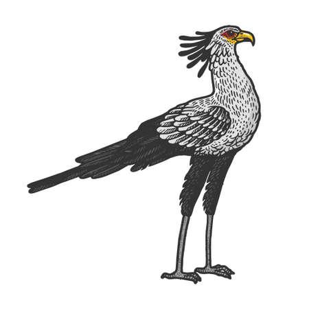 Secretary bird animal color sketch engraving vector illustration. T-shirt apparel print design. Scratch board style imitation. Hand drawn image. Vetores