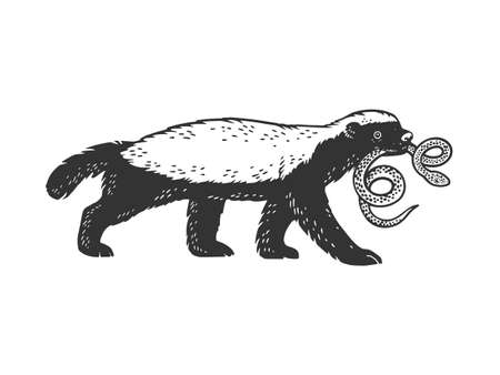 Honey badger ratel with snake in mouth animal sketch engraving vector illustration. T-shirt apparel print design. Scratch board imitation. Black and white hand drawn image. 向量圖像