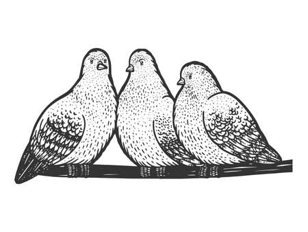 Pigeons birds seat on wire sketch engraving vector illustration. T-shirt apparel print design. Scratch board imitation. Black and white hand drawn image.