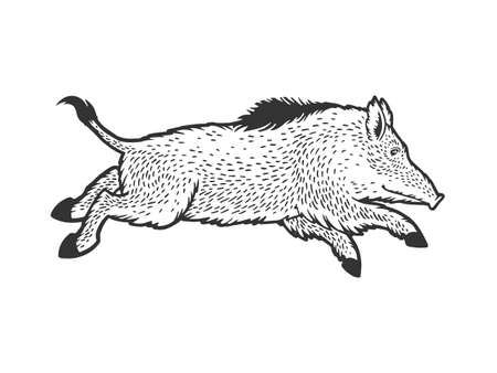 Running wild boar sketch engraving vector illustration. T-shirt apparel print design. Scratch board imitation. Black and white hand drawn image.