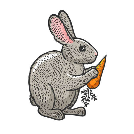 rabbit hare bunny with carrot color sketch engraving vector illustration. T-shirt apparel print design. Scratch board imitation. Black and white hand drawn image. 向量圖像