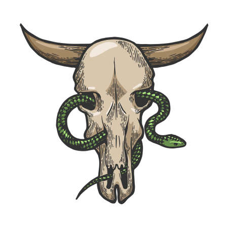 Snake in cow skull color sketch engraving vector illustration. Scratch board style imitation. Black and white hand drawn image. Ilustracja