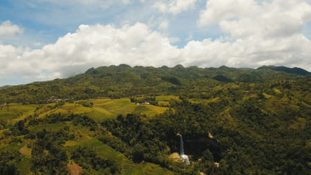 Rice field with yellowish green grass, waterfall. Aerial view: rice plantation with hilly mountains landscape. Terrace rice field from aerial view. Philippines, Bohol. Banco de Imagens