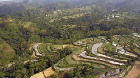 agricultural land in mountains rice terraces, fields with crops, trees. Aerial view farmlands on mountainside Java, Indonesia. tropical landscape Stok Fotoğraf