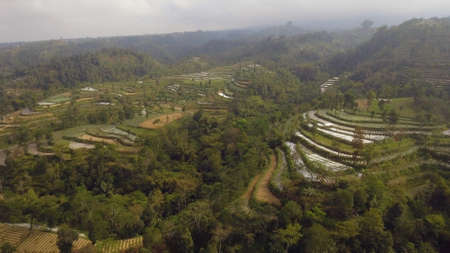 agricultural land in mountains rice terraces, fields with crops, trees. Aerial view farmlands on mountainside Java, Indonesia. tropical landscape Stock Photo