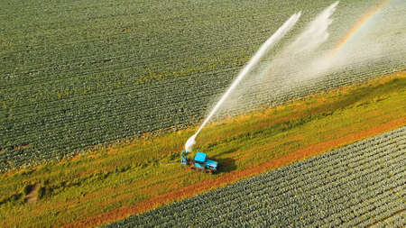 Aerial view irrigation equipment watering cabbage field. Irrigation system watering farm field.