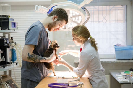 Veterinarians prepare the dog for surgery. Operating room with medical equipment in a veterinary clinic. Table for surgical operations in the hospital. 写真素材
