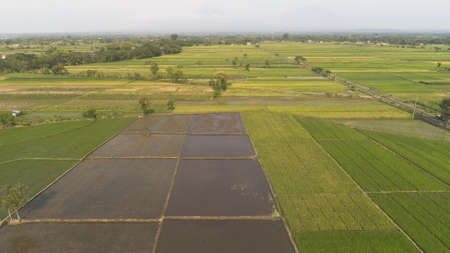aerial view rice fields, agricultural land with sown green in countryside. farmland with agricultural crops in rural areas Java Indonesia. Land with grown plants of paddy Standard-Bild - 115258105
