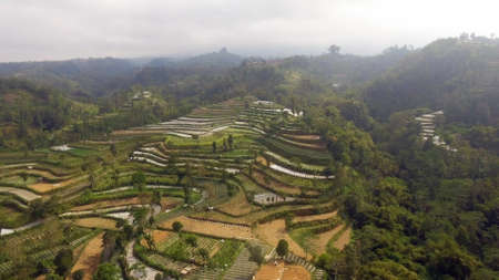 agricultural land in mountains rice terraces, fields with crops, trees. Aerial view farmlands on mountainside Java, Indonesia. tropical landscape Standard-Bild - 115258106