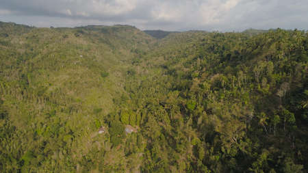 tropical forest on mountain slopes. aerial view rainforest in Indonesia. tropical forest with green, lush vegetation. Standard-Bild - 115258331