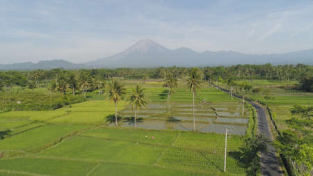 tropical landscape rice fields, mountains, palm trees. aerial view farmland with agricultural crops in rural areas Java Indonesia Standard-Bild - 115258419