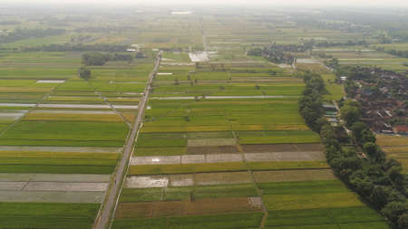 aerial view rice fields, agricultural land with sown green in countryside. farmland with agricultural crops in rural areas Java Indonesia. Land with grown plants of paddy Standard-Bild - 115258420