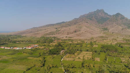 aerial view agricultural farmland with sown green,corn, tobacco field in countryside backdrop mountains. agricultural crops in rural area Java Indonesia. Land with grown plants of paddy Standard-Bild - 115258421