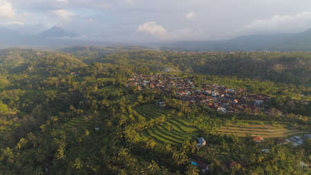 village among rice fields and terraces in Asia. aerial view farmland with rice terrace agricultural crops in countryside Indonesia, Bali. Standard-Bild - 115258503