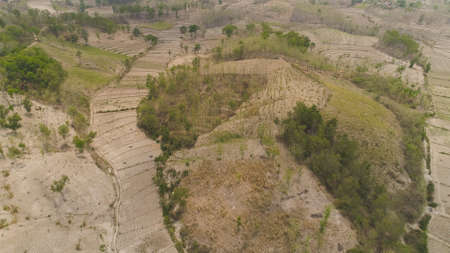 agricultural land in rural areas with farmlands, fields with crops, trees in arid hilly terrain. aerial view growing crops in asia in hilly areas Indonesia. Standard-Bild - 115258595