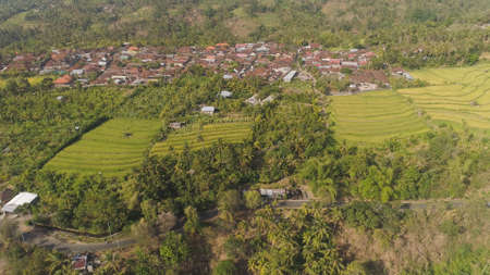 village among rice fields and terraces in Asia. aerial view farmland with rice terrace agricultural crops in countryside Indonesia, Bali. Standard-Bild - 115258596