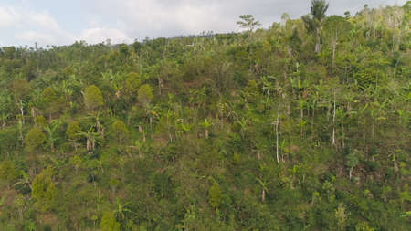 tropical forest on mountain slopes. aerial view rainforest in Indonesia. tropical forest with green, lush vegetation. Standard-Bild - 115258610
