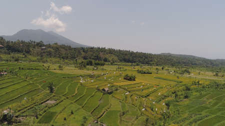 rice fields, agricultural land in countryside. aerial view farmland with rice terrace agricultural crops in rural areas Indonesia Standard-Bild - 115258611