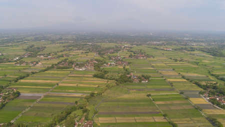 agricultural landscape in asia with rice fields, farmers village agricultural land with sown green in countryside. farmland with agricultural crops in rural areas Java Indonesia. Land with grown plants of paddy Standard-Bild - 115259691