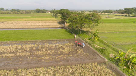 farmer working in rice plantation using tiller tractor. aerial view paddy farmer prepares the land planting rice. farmland with agricultural crops in rural areas Java Indonesia Standard-Bild - 115259697