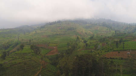 agricultural land in mountains fog and clouds, fields with crops, trees. Aerial view farmlands on mountainside Java, Indonesia. tropical landscape Stok Fotoğraf