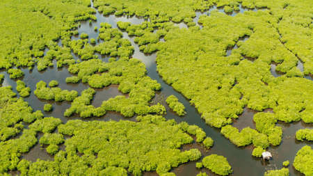 Aerial view of rivers in tropical mangrove forests. Mangrove landscape, Siargao,Philippines. Stok Fotoğraf
