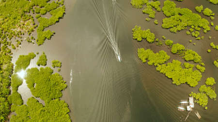 Boats sails in the mangroves among green trees aerial view. Mangrove jungles, trees, river. Mangrove landscape