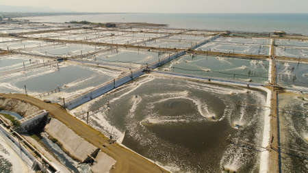 shrimp farm, prawn farming with with aerator pump oxygenation water near ocean. aerial view fish farm with ponds growing fish and shrimp and other seafood. Fish hatchery pond aerial view aquaculture business exported international market. java, indonesia 免版税图像