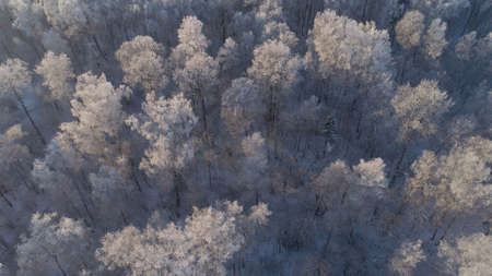 aerial view winter landscape forest covered snow, frost. Frozen branches with hoarfrost in winter forest on sunny day