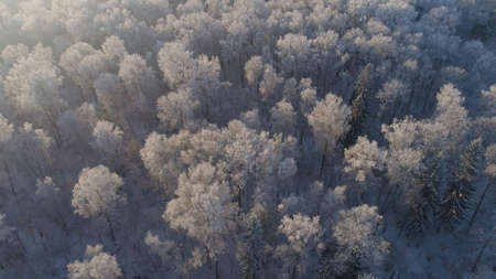 aerial view forest covered snow, frost. Frozen branches with hoarfrost in winter forest on sunny day winter landscape