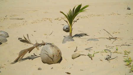 Coconut palm tree sprouting on beautiful beach. Summer and travel vacation concept